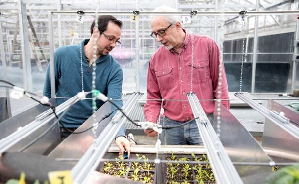UGA researchers receive $5M to help reduce energy costs of indoor farming